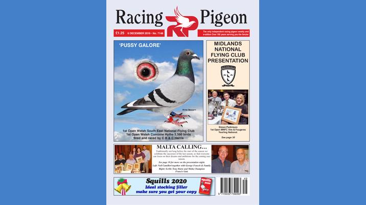 Racing Pigeon chooses Intermedia